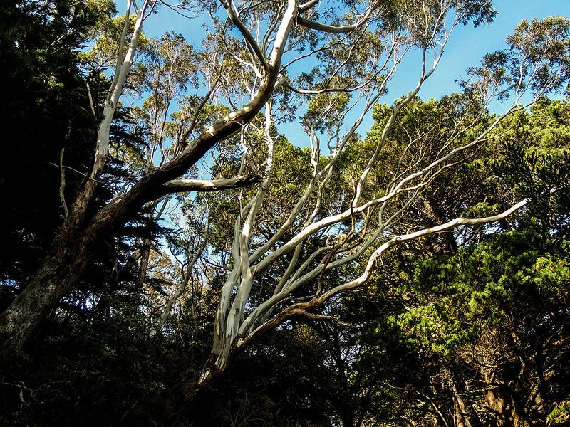 Tuxedo Trees.jpg