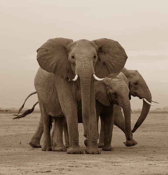elephant-3-.jpg