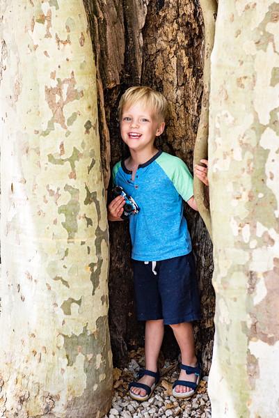 Jaxson in the plane tree in Gigondas