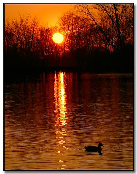 evening-at-pond-NPN.jpg