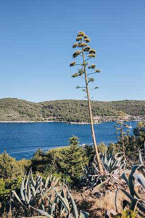 Engagement Vis Island, Croatia