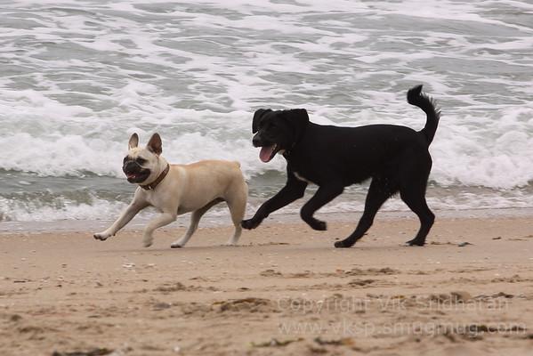 Dog Beach - 5/17/12