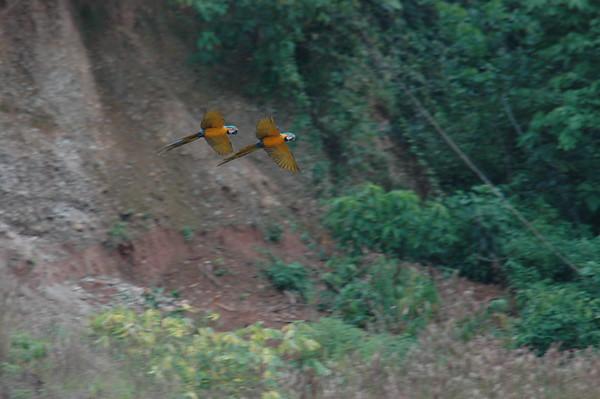 Tambopata Peru 2004