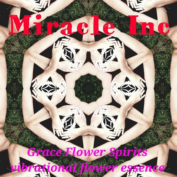 image3A64303_mirror.jpg