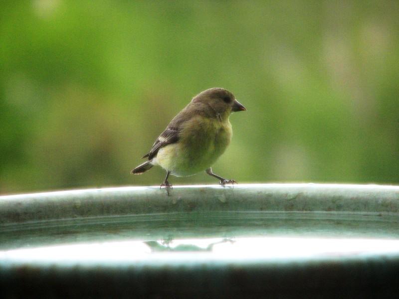 birds (167).jpg