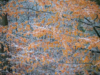 Novemberfrost