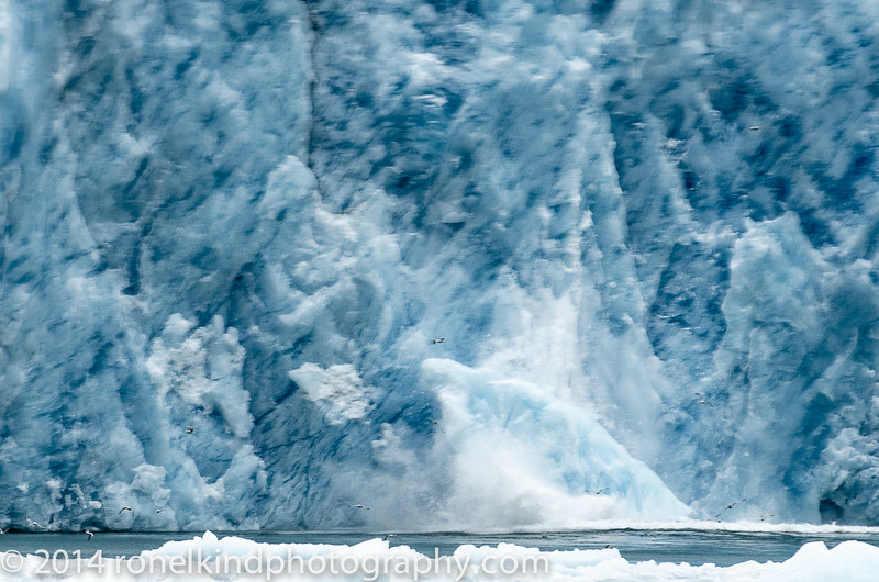 With an explosion of sound, a huge iceberg calved off the glacier...