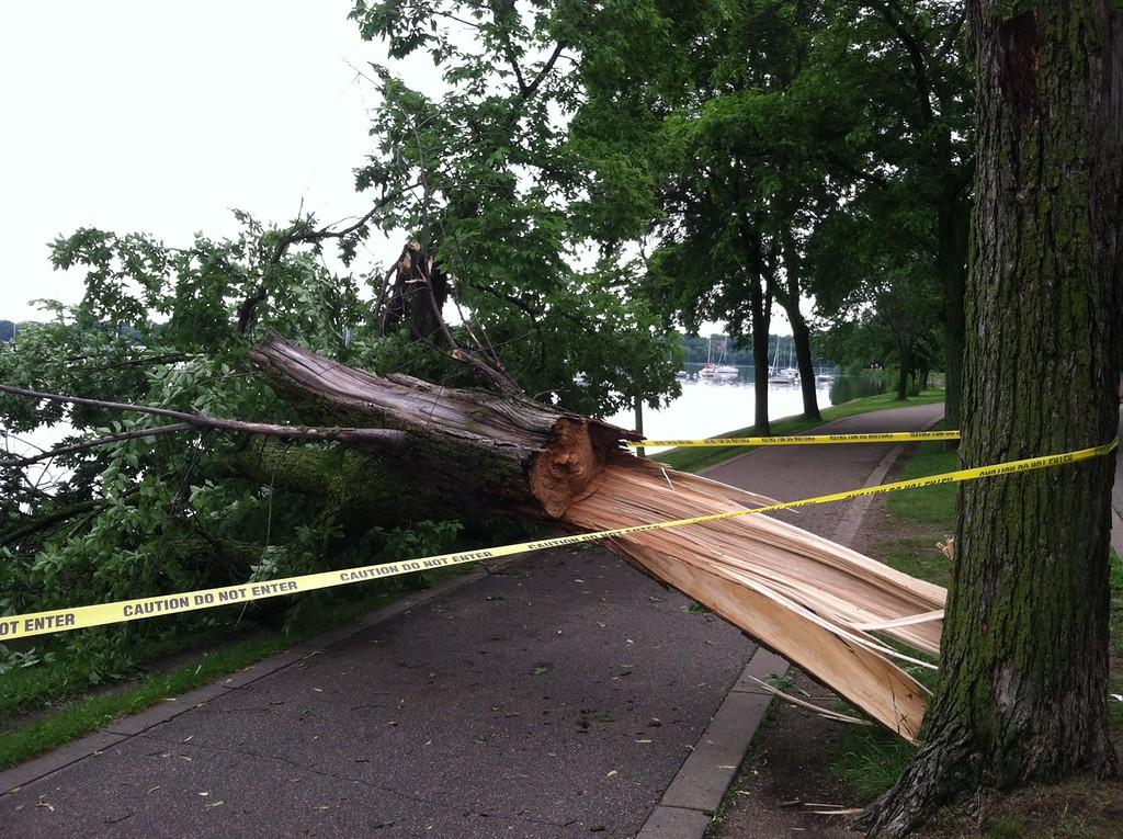 . A tree blocks a walking path on the west side of Lake Harriet in Minneapolis. (Pioneer Press: John Shipley)