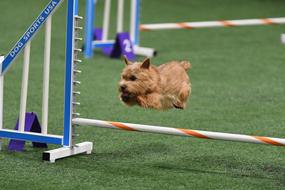 WHWT AKC Agility Trial September 30-October 1