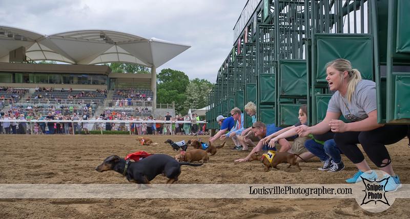 Belterra Park 2017 Wiener Dog Races-18.jpg