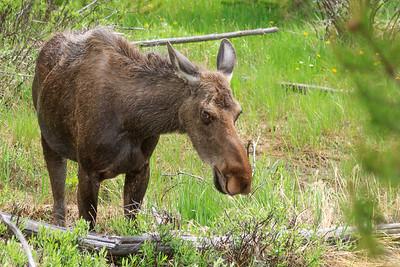 2017 RMNP Wildlife