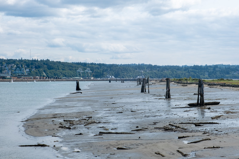 Jetty Island in Everett, WA