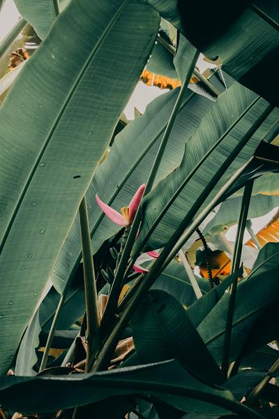 Hawaii20-387.jpg