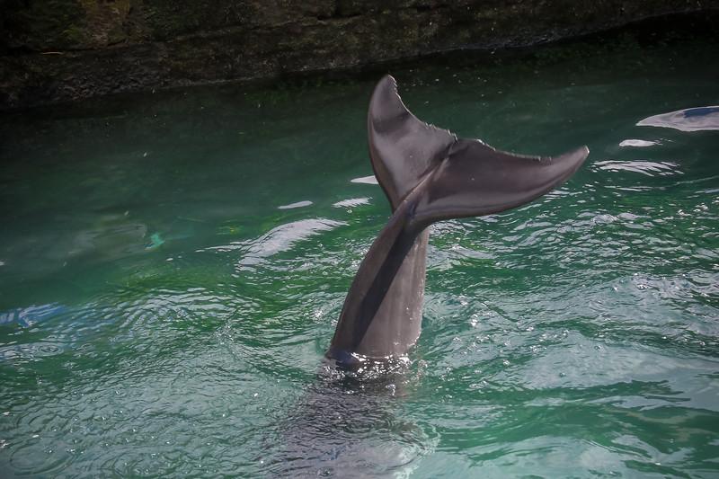 2019 August Dolphin Quest-135.jpg