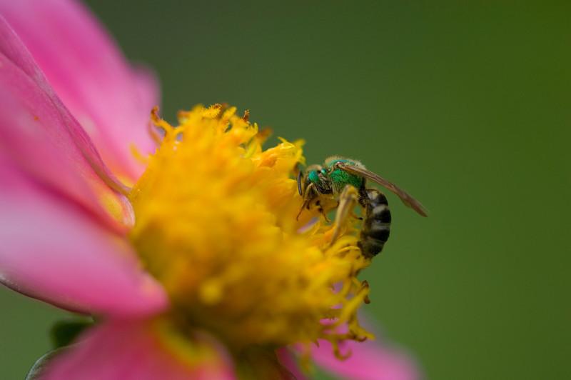 flowerbug0952.jpg