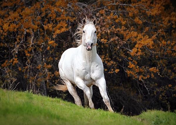 Fairlea Ranch 2011 Stallion shoot