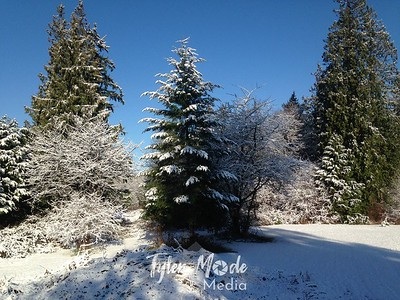 Snow and Cold Late November 2014