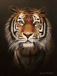 """""""Fierce"""" (conté and charcoal) by Carol Gromer"""