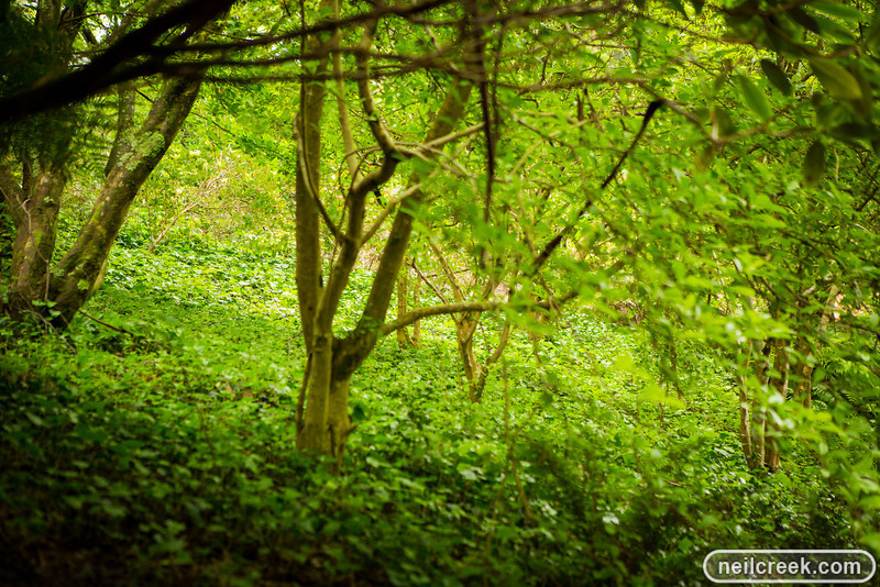creek-121102-108.jpg