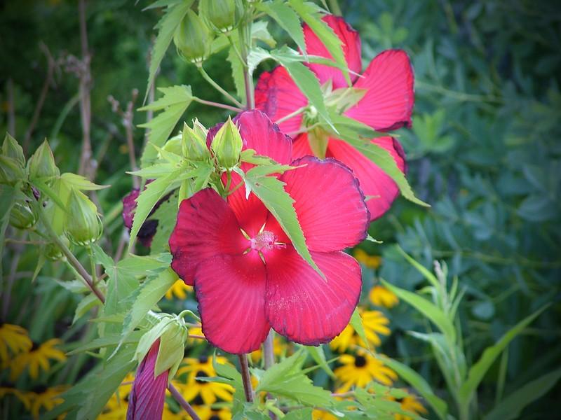 Flowers 084.jpg