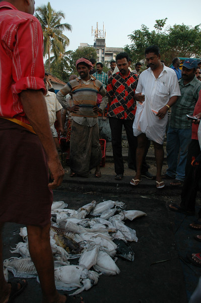 Fish from the boats are dumped on the sidewalk at the fish market and auctioned on the spot.