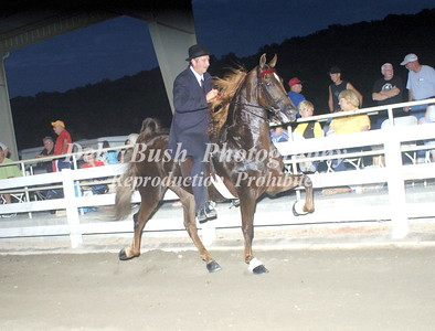 CLASS 11  SADDLEBRED OPEN