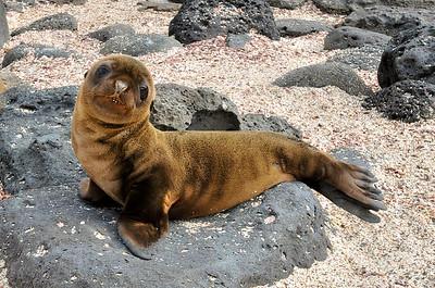 Galapagos Teenager