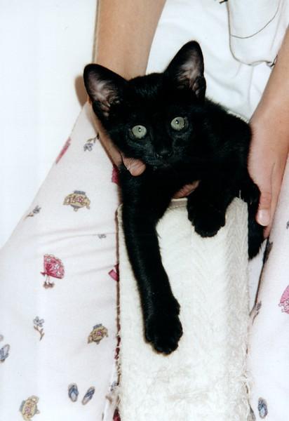 2000_April_Cats