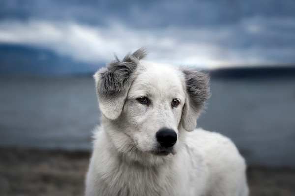 portraits & pets
