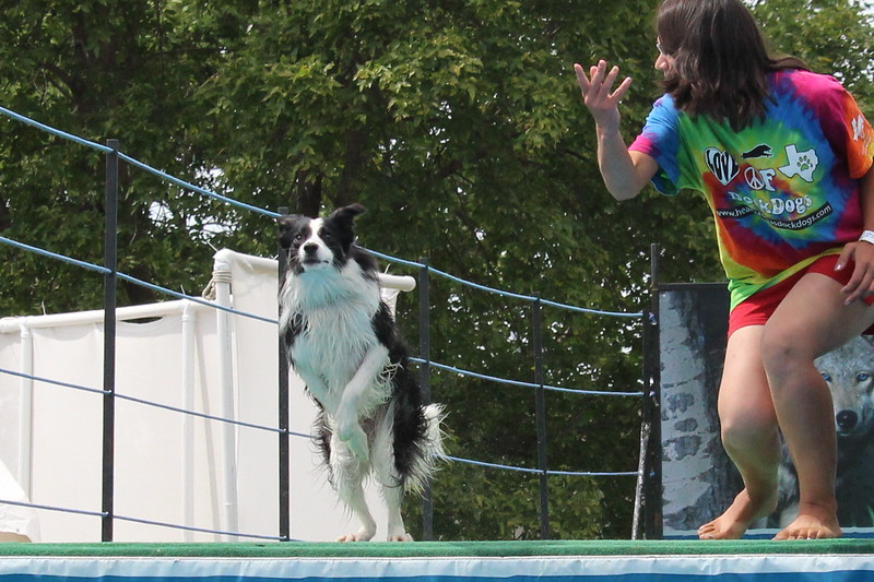 2015.8.6 Winnebago County Fair Dock Dogs (51).JPG