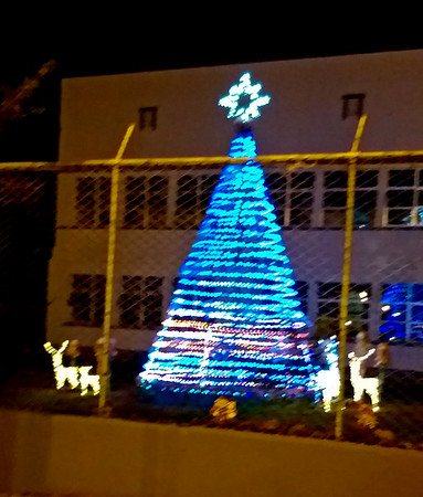 2019 Christmas Trees