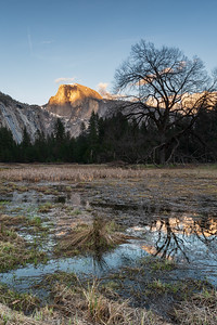 Yosemite Marsh at Sunset