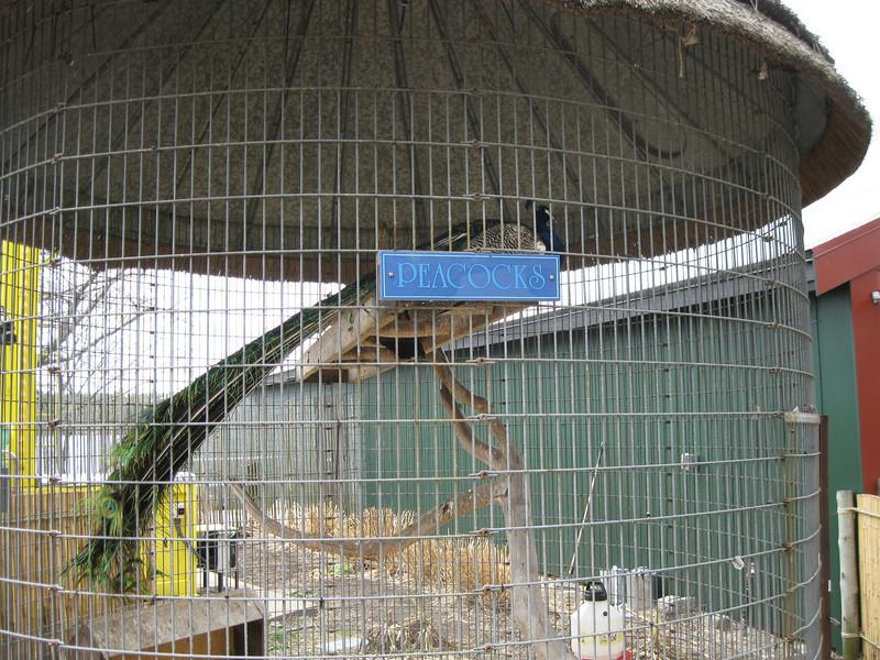 Peacock hut.