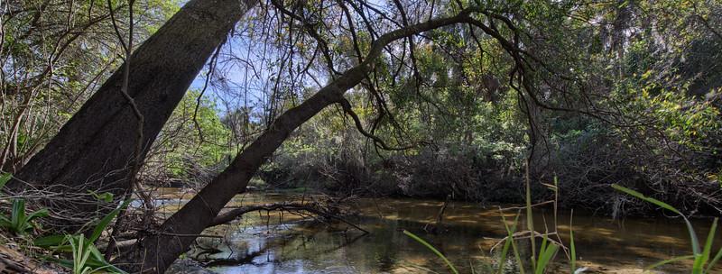 Little Manatee River 4.jpg