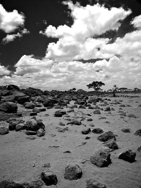 Semi-desert? If the rain stays away, this might be final end to the plains of the Amboseli. (Foto: Geir)