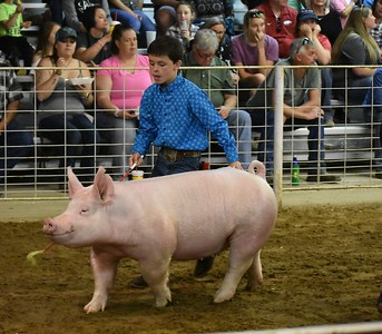 Hunt County Fair 2018: Market Hogs