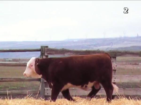 2016 BB Cattle
