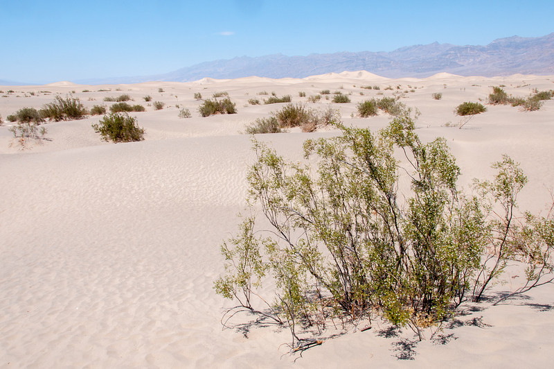 Sand dunes at Death Valley desert in California