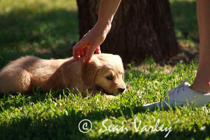 2011.04.16 Daisy 0092.jpg