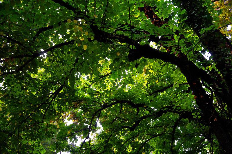 green shelter 11-3-2011.jpg