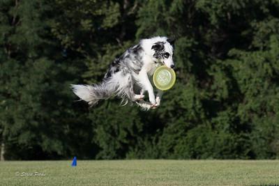 Dayton Frisbee
