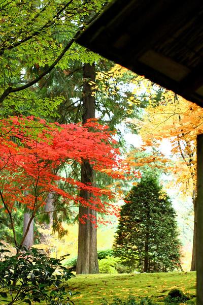 Portland Japanese Garden  11-11-11  3525.jpg