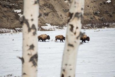 Montana, Wyoming