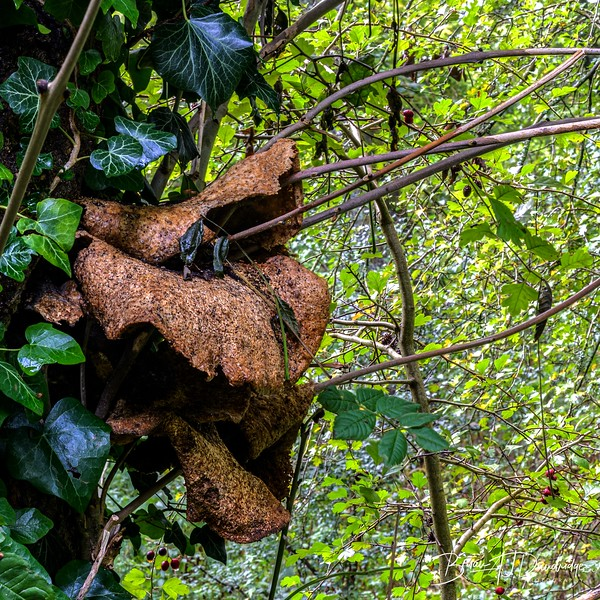 Fungi_WoodsMill_HFS01.jpg