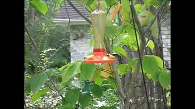Hummingbirds Fighting at Feeder Sept 15 2007