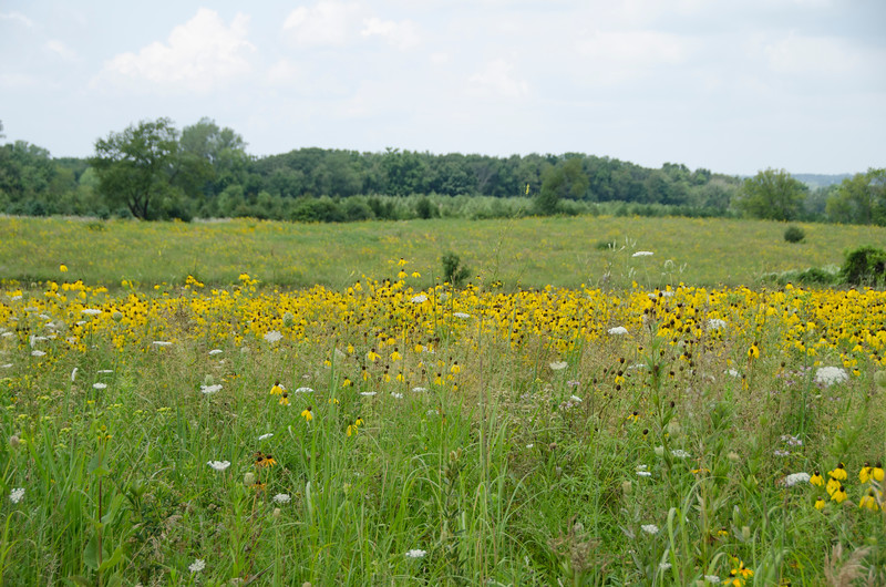 The Ford prairie looks great!