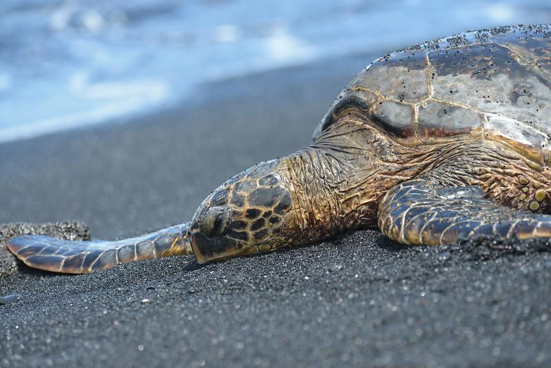 Big Island - Hawaii - May 2013 - 11.jpg
