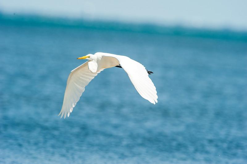 Fort Desoto Birds 2-17.jpg