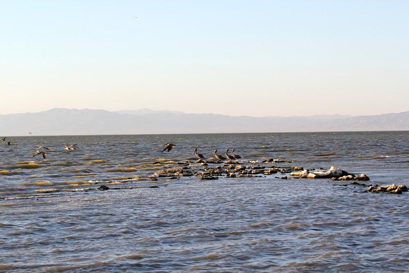 04 The Salton sea (60).JPG