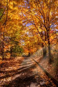 Fall Color - Lake Thoreau, Reston - Nov 2018